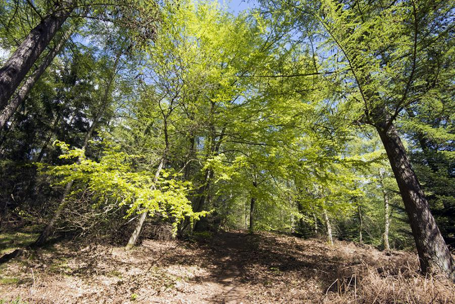 Foto af naturen i skoven