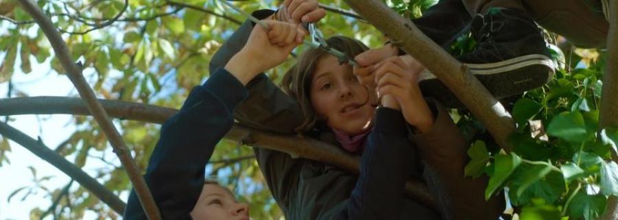 Personer i et træ