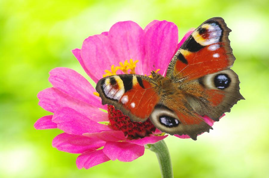 Sommerfugl der sidder på vild blomst
